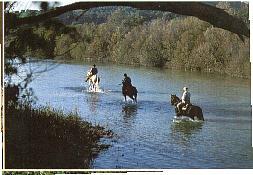 Escursioni a cavallo in maremma toscana vicino a punta ala