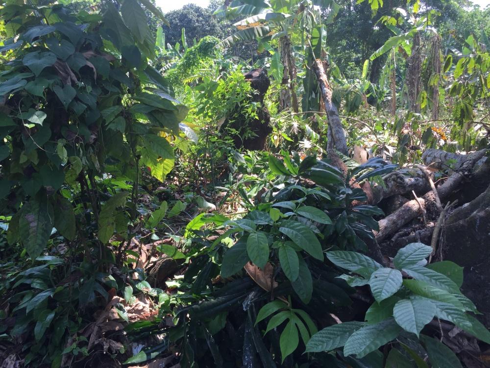 Vacanza nell'isola di Principe Sao tomè scoprendo fondali, piantagioni e foreste incontaminate