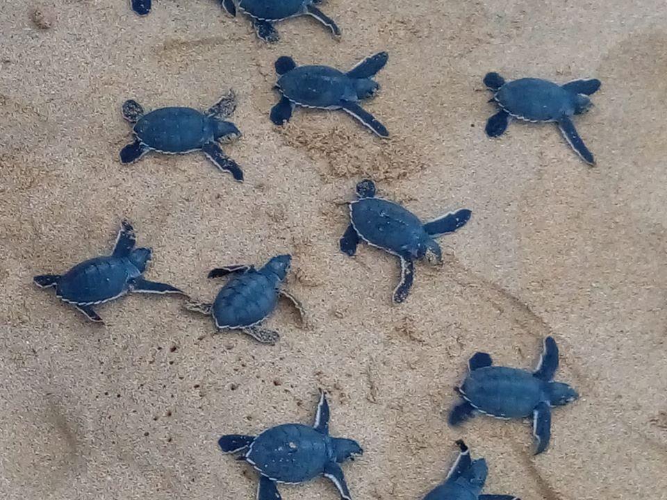Viaggio nell'Isola di Principe e escursioni alla ricerca di esperienze emozionanti con le tartarughe